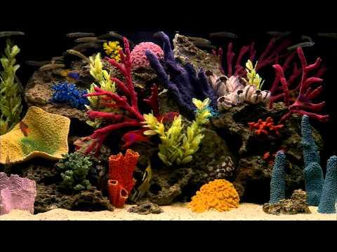 Программу аквариум на рабочий стол