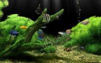 Dream Aquarium – заставка аквариум на компьютер