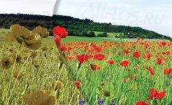 EnChroma – очки для дальтоников исправляющие зрение