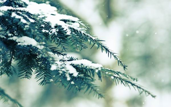 HD обои зима 1920x1080, 1920x1200 » All4os.ru: all4os.ru/oboi/1233-hd-oboi-zima-1920x1080-1920x1200.html