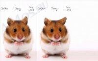 Talking Hamster - приложение для повторения речи