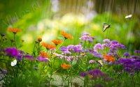 Скринсейвер поляна с бабочками